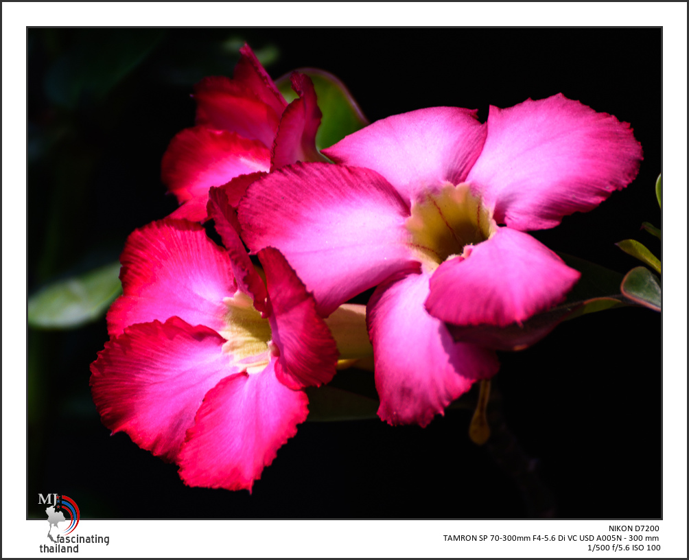 Post your flower pics-red-blossoms-wind-1.jpg
