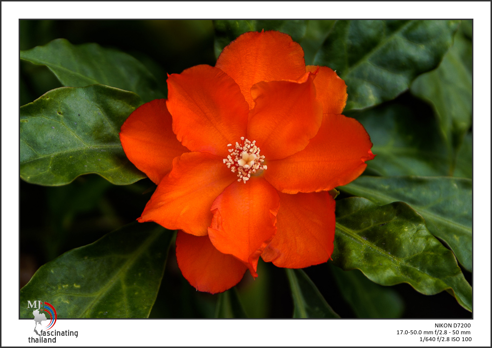 Post your flower pics-red-shadow-1.jpg