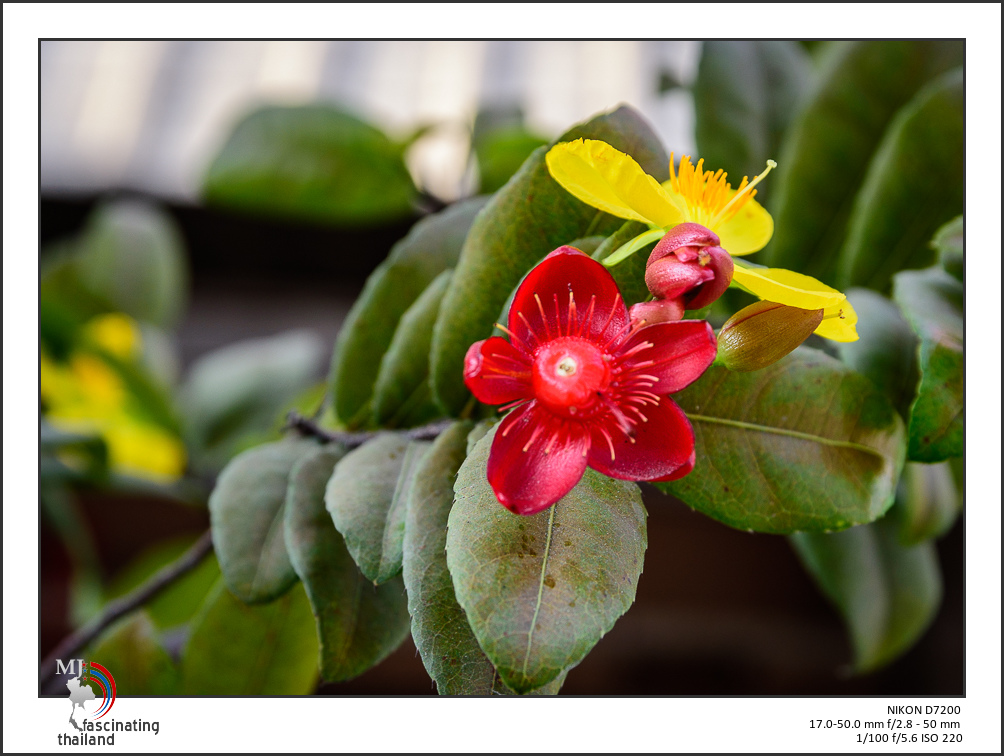 Post your flower pics-red-1.jpg