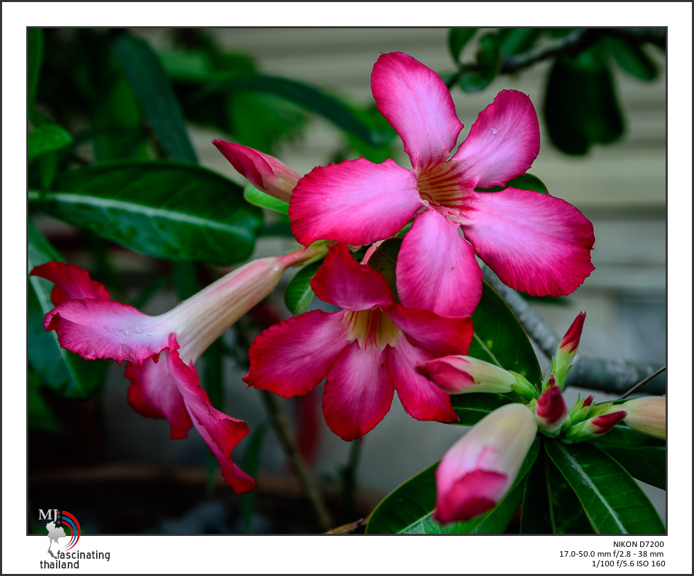 Post your flower pics-reds-1.jpg