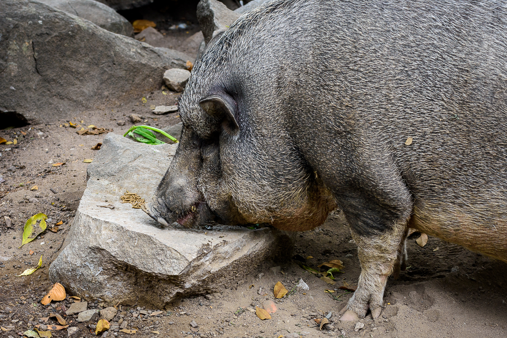 Inspired by the moment-pig-1.jpg