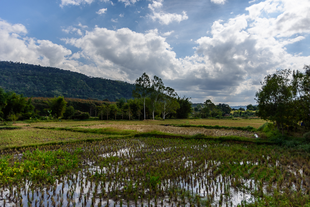 Inspired by the moment-ricefields-1.jpg