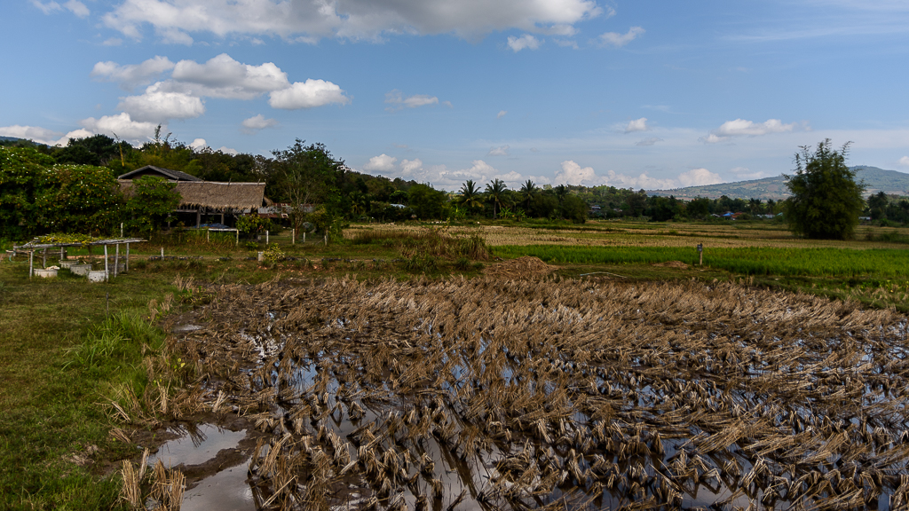 Inspired by the moment-ricefields-2.jpg