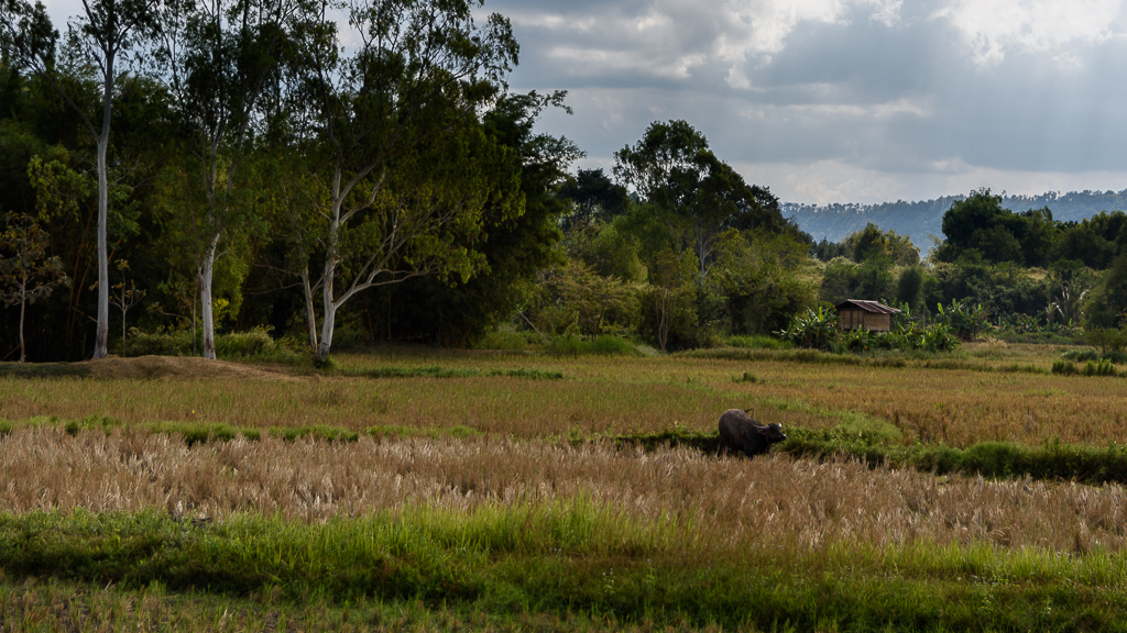 Inspired by the moment-ricefields-3.jpg