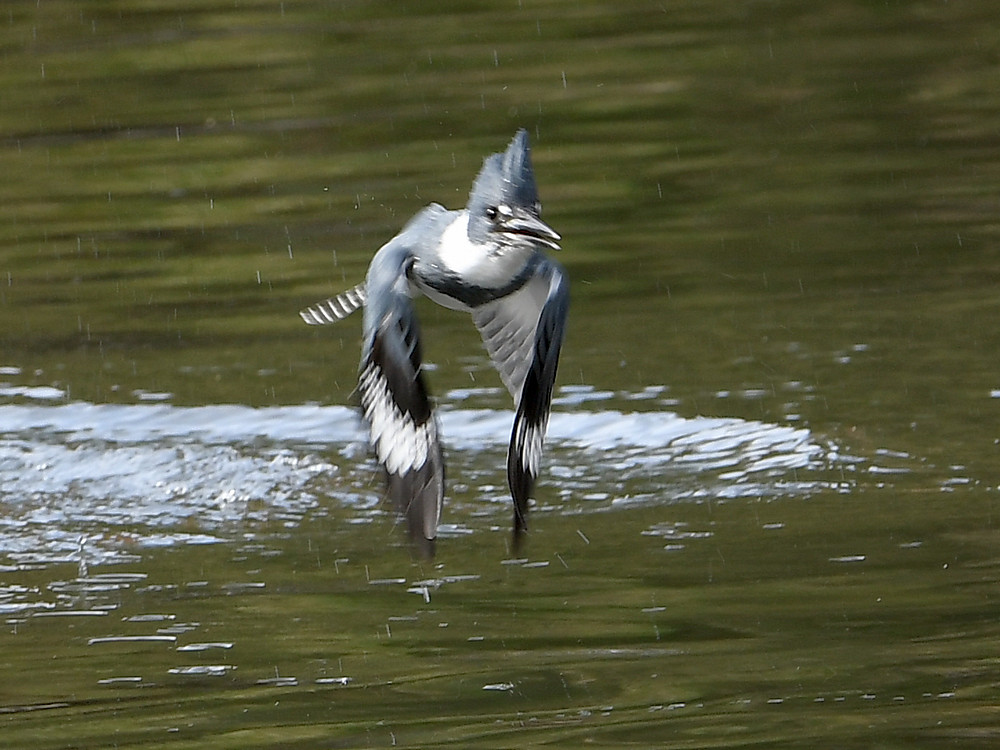 Post your 'ALMOST' Photos..-kingfisher2.jpg