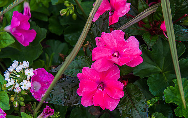 Post your flower pics-a81_4666.jpg