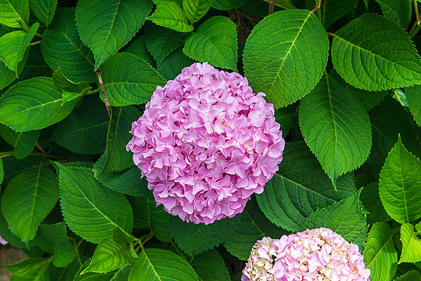 Post your flower pics-a81_4778.jpg