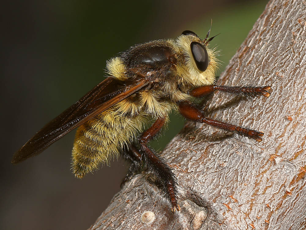 Post your Insect shots-rbberfly.jpg