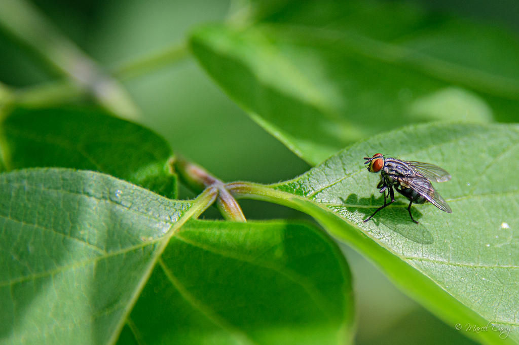 Post your Insect shots-dsc_8901.jpg