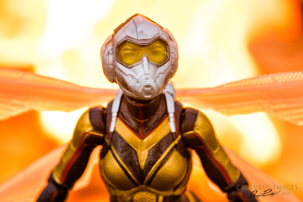 Toy Photography - Let's see them.-w_d85_2591.jpg