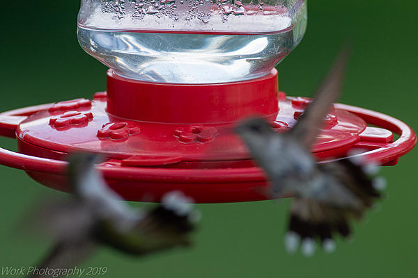 Post your 'ALMOST' Photos..-hummingbirds-8626.jpg