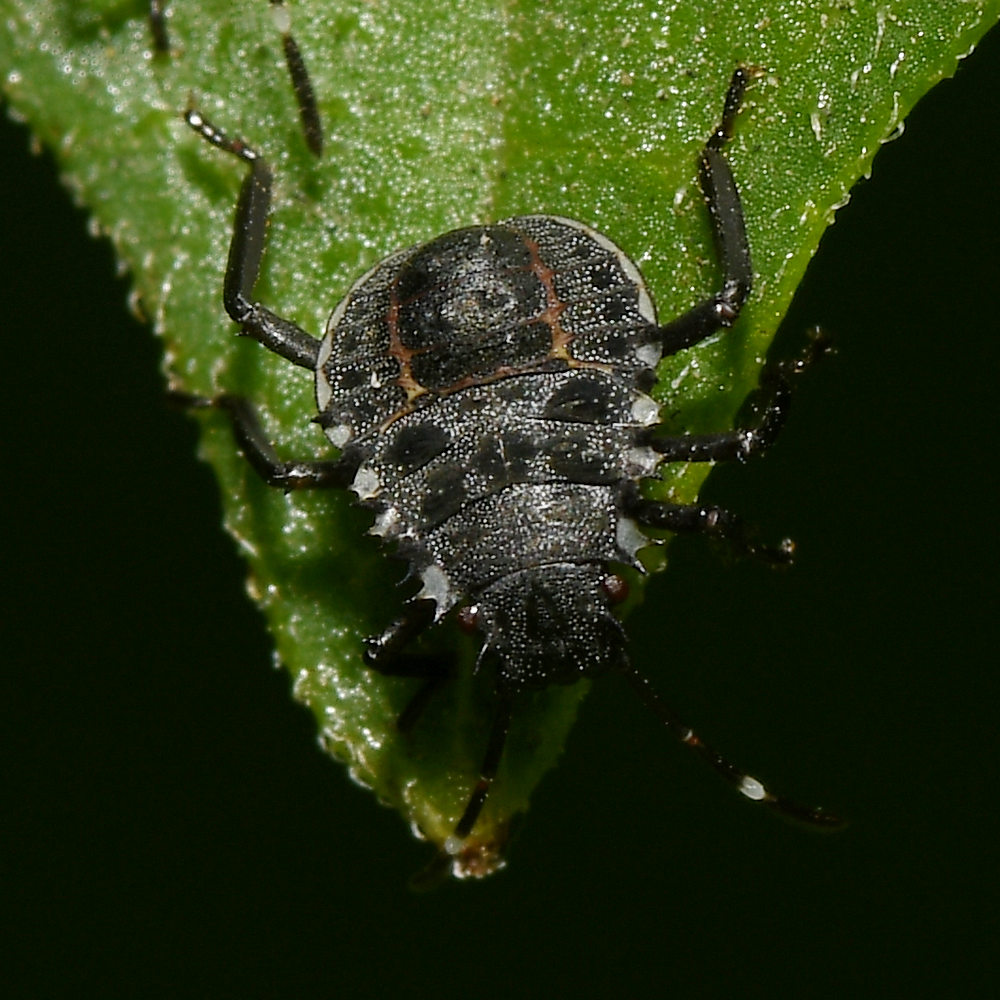 Post your Insect shots-beetle3.jpg