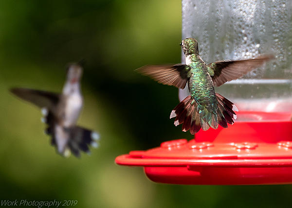 Post your 'ALMOST' Photos..-hummingbirds-5782.jpg