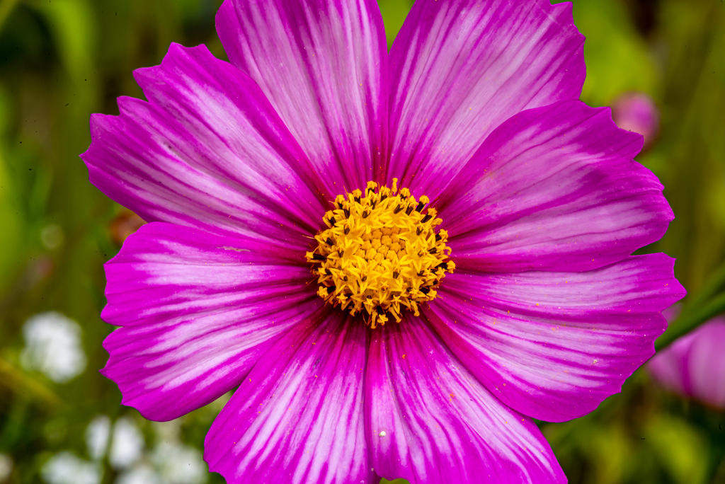 Post your flower pics-610_0838.jpg