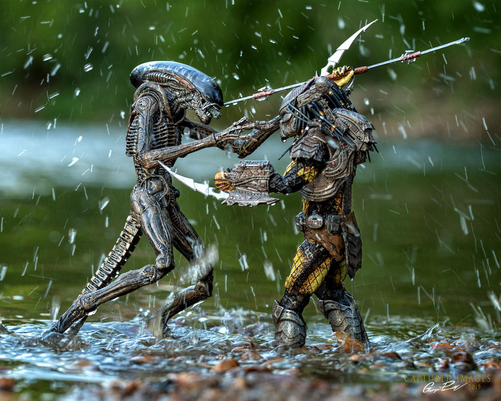 Toy Photography - Let's see them.-w_dfg_8298.jpg