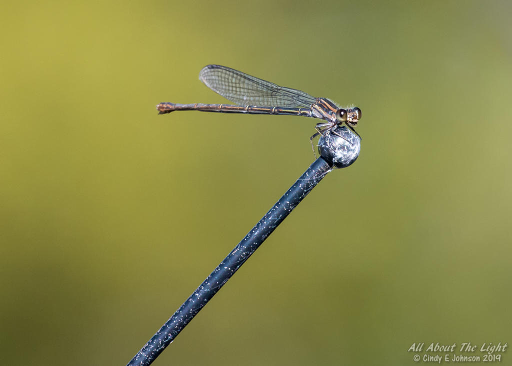 Post your Insect shots-_nik1307-low-res.jpg