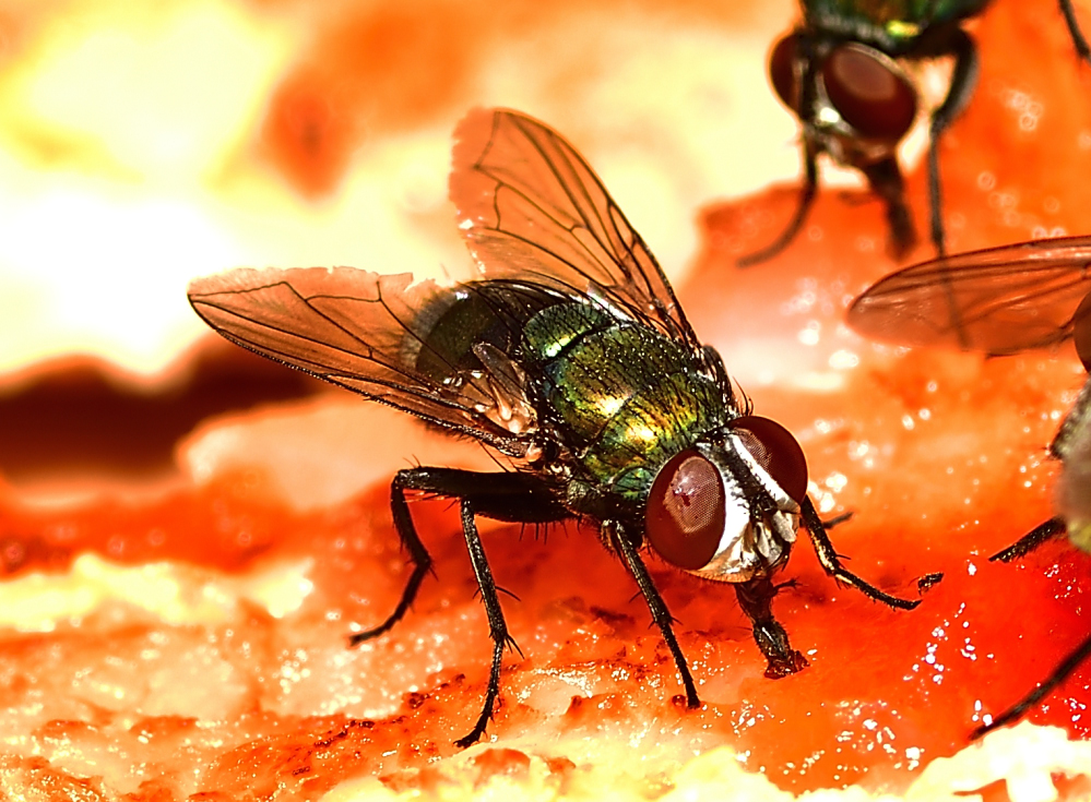Post your Insect shots-_roy2770.jpg