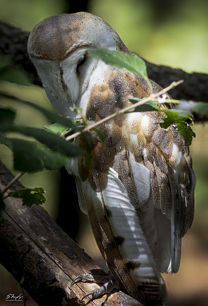 A couple of hours at Brookgreen Gardens-owl1.jpg