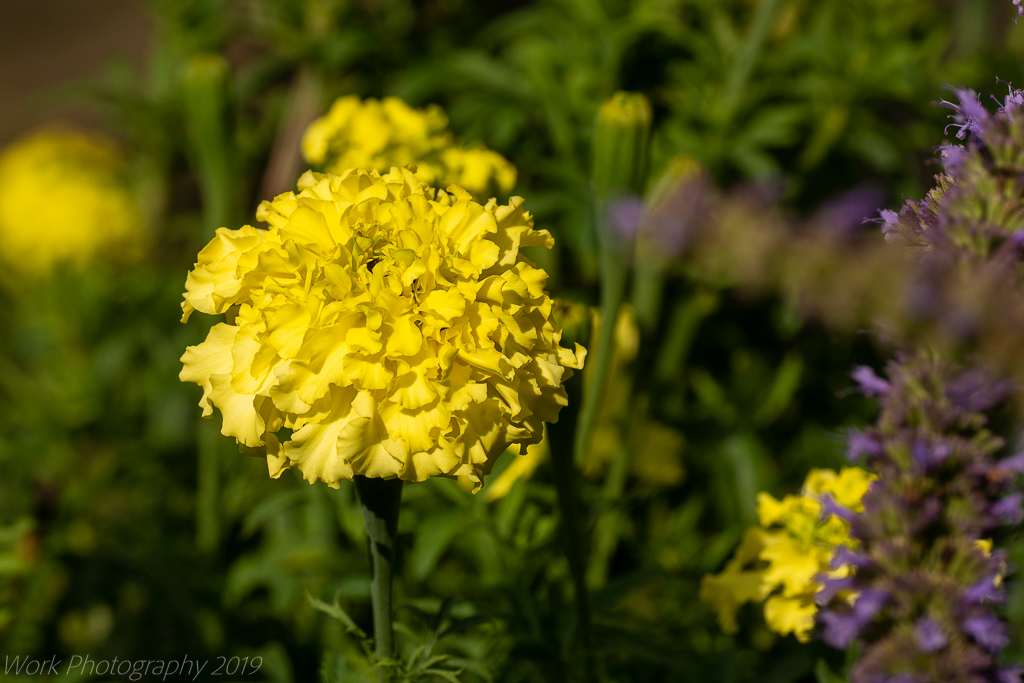 Post your flower pics-untitled-shoot-8945.jpg