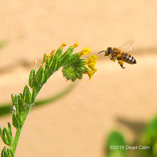 Post your favorite/best shot in 2019-bee-n-500_8745.jpg