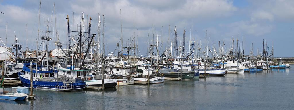 Boats Anyone-westport-harbor-wa-02-sm.jpg