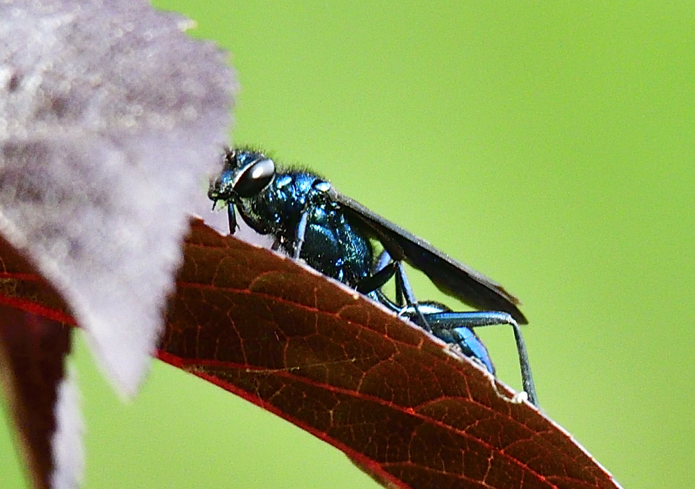 Post your Insect shots-_roy2609_00001.jpg