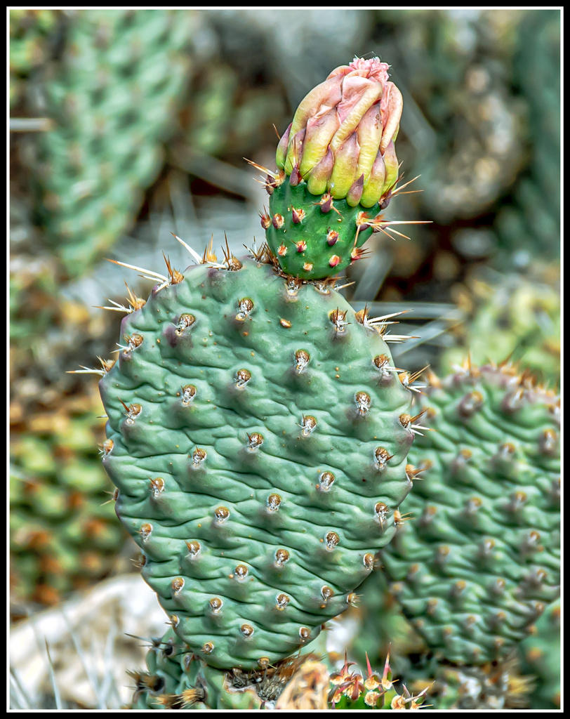 Cactus and succulents-710_8565-edit.jpg