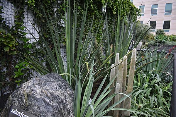 Cactus and succulents-2019-12-11-15.47.09-s.jpeg