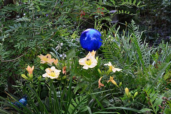 Post your flower pics-daylilly-2.jpg
