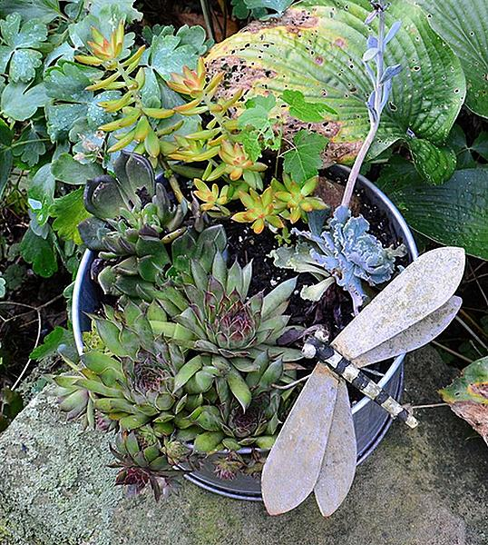 Cactus and succulents-dragonfly-sharpen-sharpen.jpg