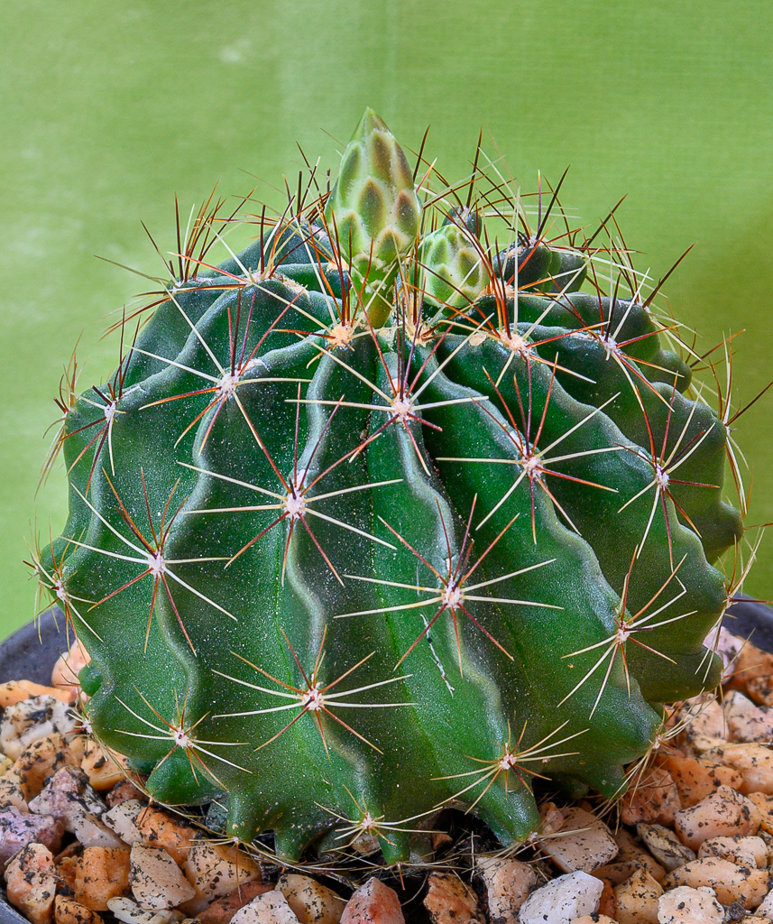 Cactus and succulents-greeny2-1-2.jpg