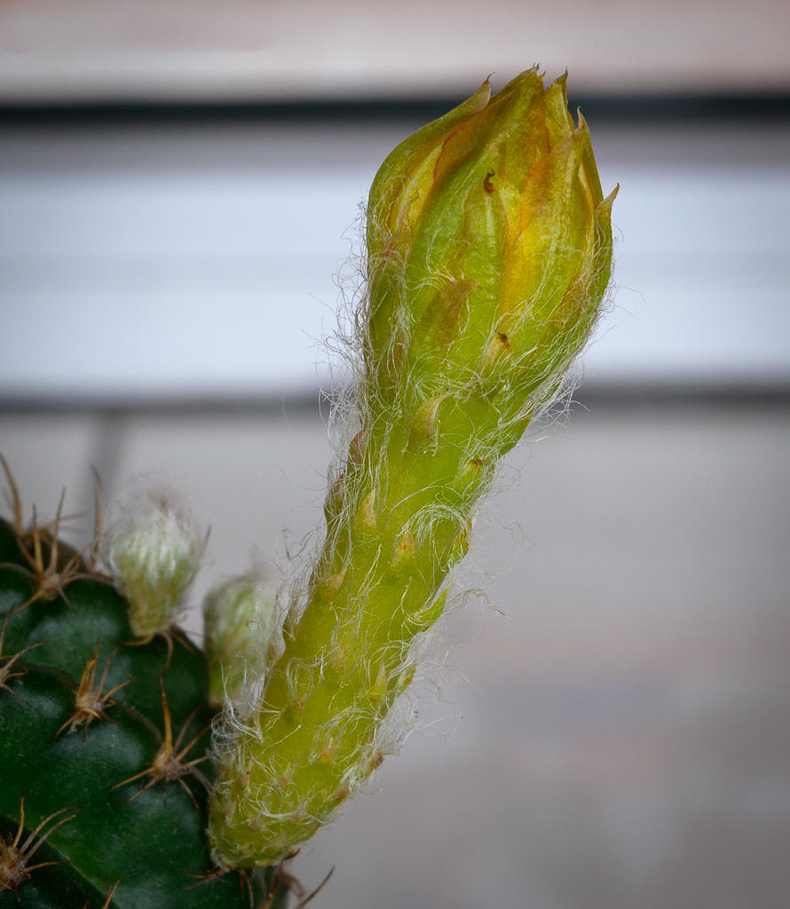 Cactus and succulents-blooming-soon-1.jpg