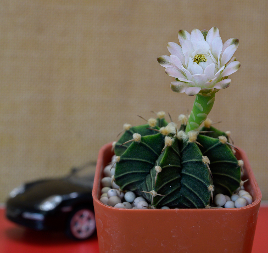 Cactus and succulents-blossom-car-1-3.jpg