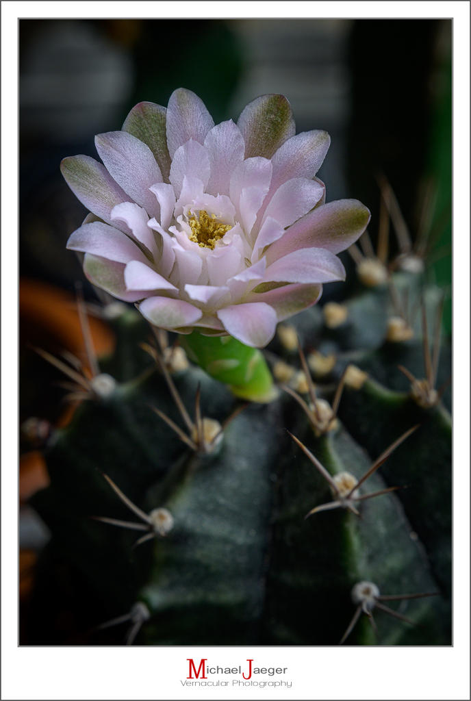 Cactus and succulents-afternoon-blossom-6.jpg