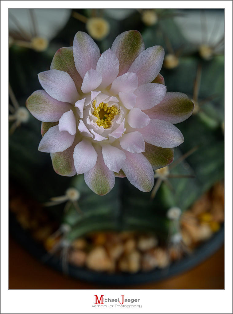 Cactus and succulents-afternoon-blossom-8.jpg