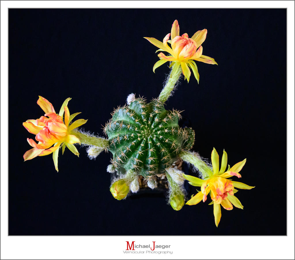 Cactus and succulents-soon-1.jpg