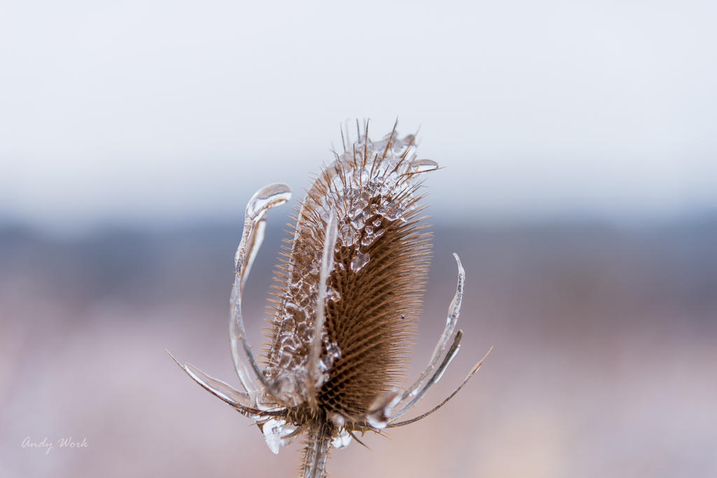 post your ice photos-untitled-2653.jpg