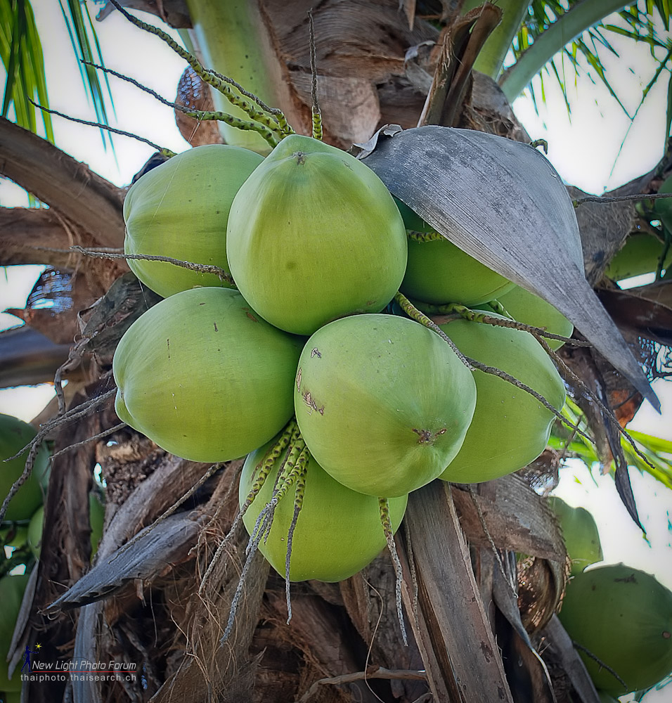 Post your Fruit-coco-1.jpg