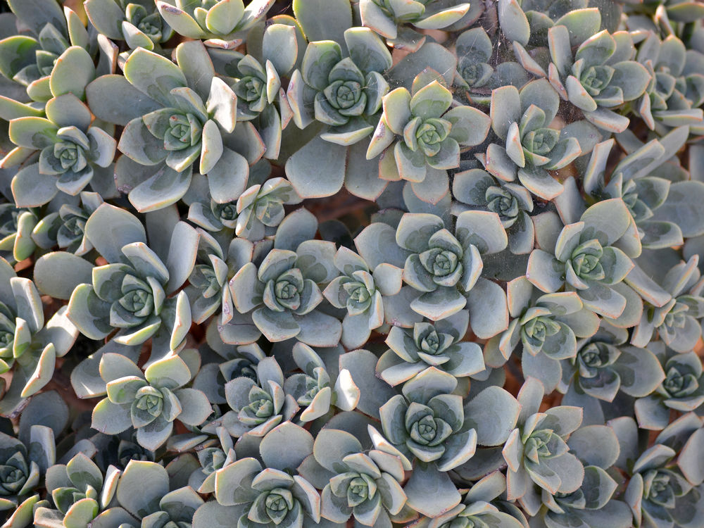 Cactus and succulents-succulants08jan2014.jpg
