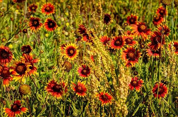 How about posting your HDR images?-flowerhdr.jpg