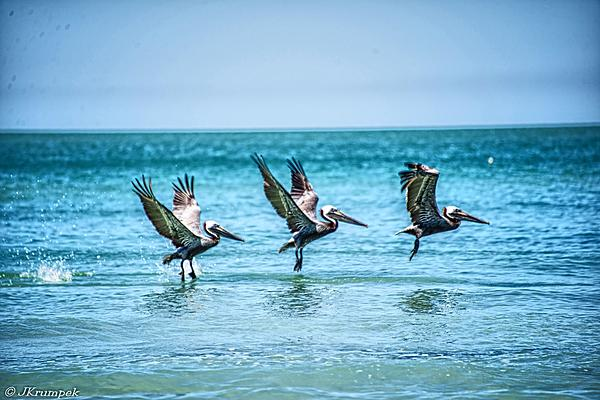 Couple of HDR's from Florida vacation-pelicanshdr.jpg