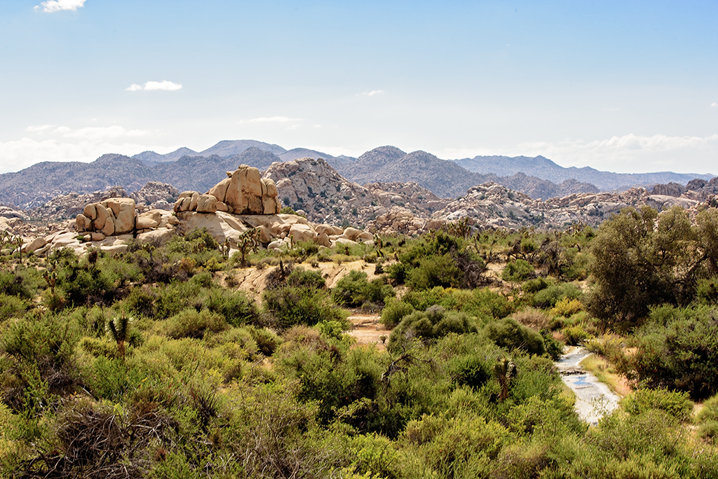 joshua tree national park senior dating site Here's a guide to getting around in joshua tree national park - everything you need to know  honeymoons senior single student women all slideshows.