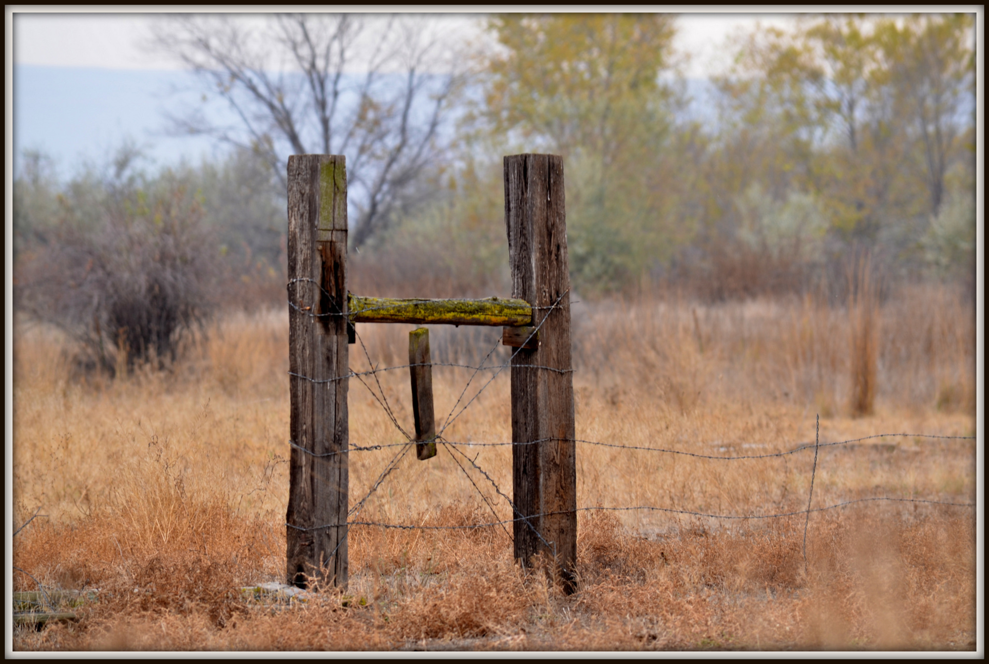 Post your fences - gates-sunnyside-l-224.jpg