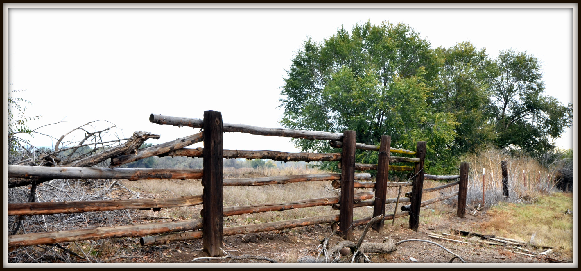 Post your fences - gates-sunnyside-s-140.jpg
