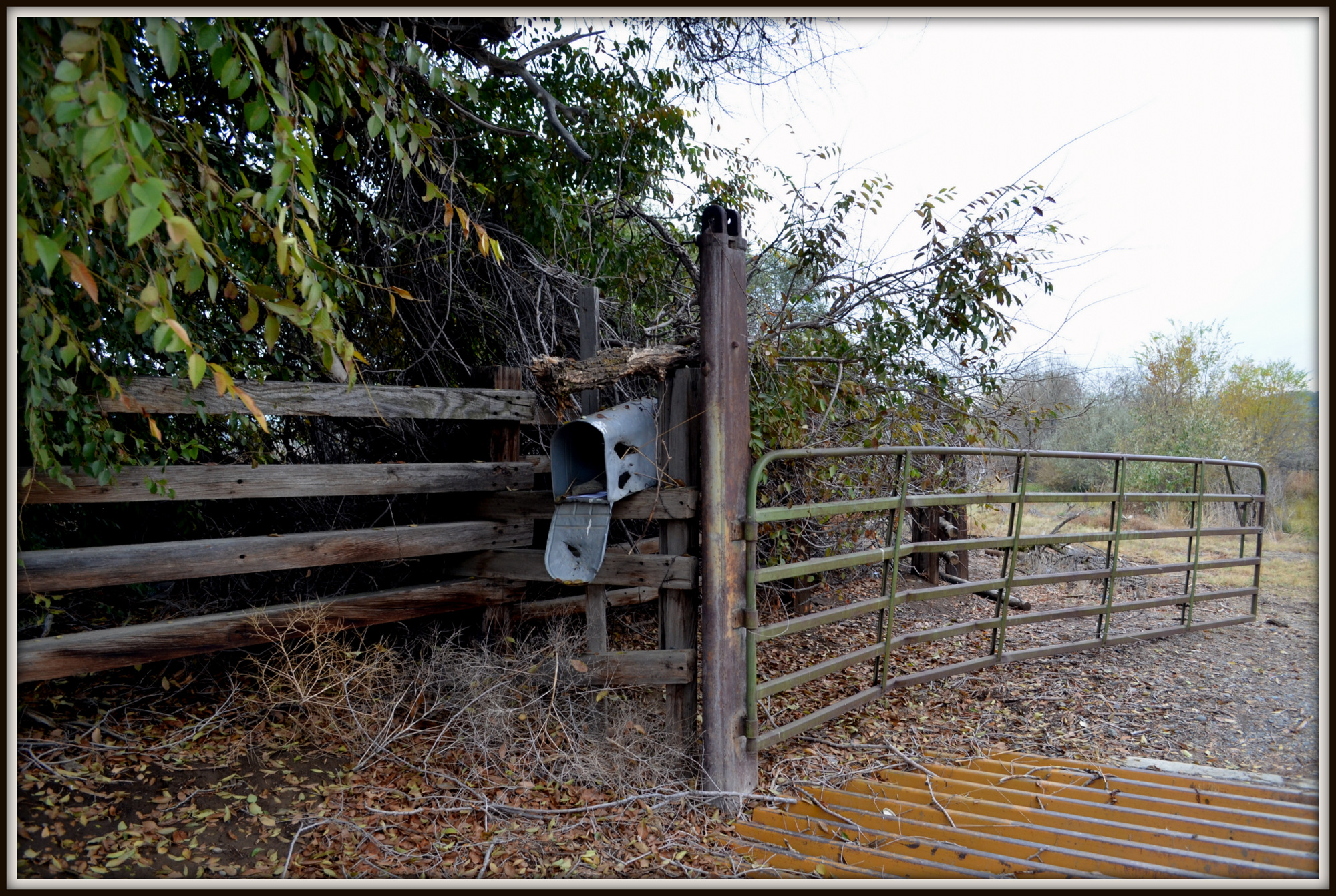 Post your fences - gates-sunnyside-s-144.jpg