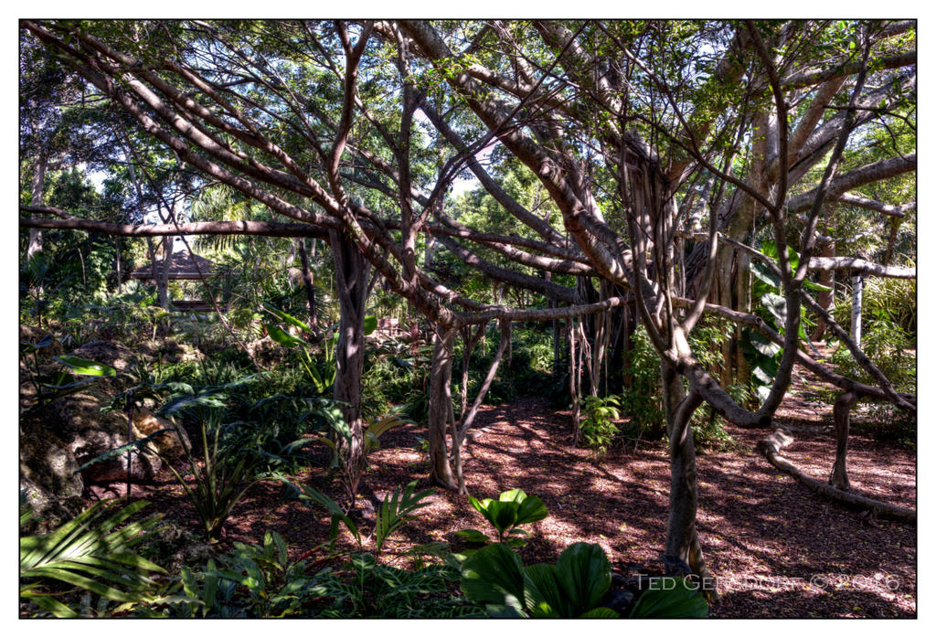 Deerfield Beach Rain Forest Project-10-21-16-arboretum-hdr-10sm.jpg