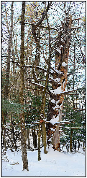 Post your vertical stitched photos-once-mighty-tree.jpg