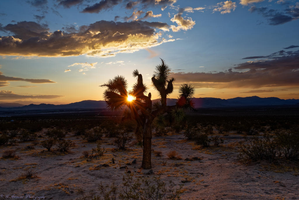 Post Your Landscape Photos-joshua-tree-sunset-2-2.jpg