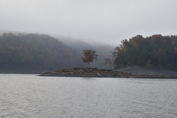Post your fog shots-fog-island-tree.jpg