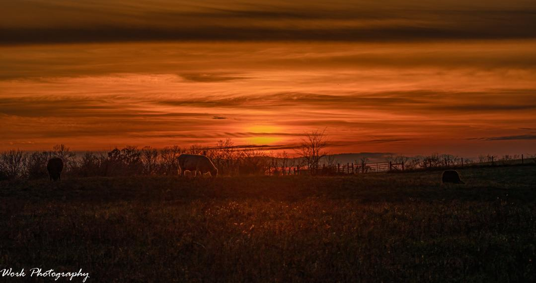 Post your sunset shots-rd5_5105-sunset-cow.jpg